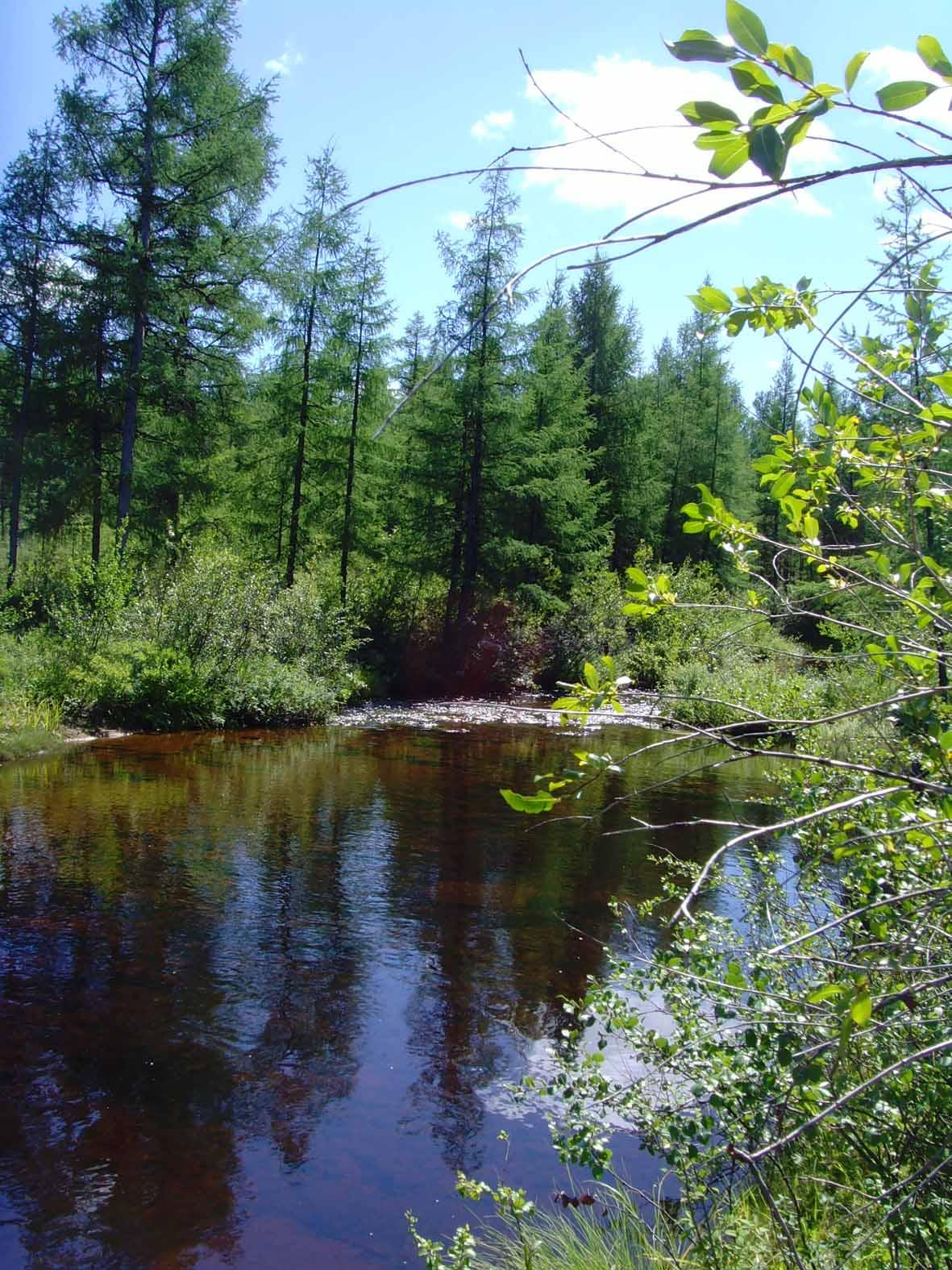 ЛЕТО: http://greenwrld.narod.ru/leto.html